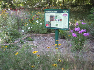 The Harwood Learning Landscape Arboretum & Wildflower Trail at Kettunen Center has a new theme garden to manage rain water runoff.